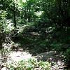 Beaver_Brook Feeder6 5-31-11