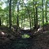 Beaver_Brook Feeder2 5-31-11