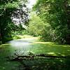 Dorsey's Pond (from Barney Lane).