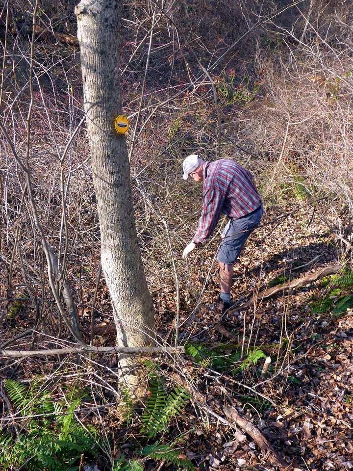 Clearing access to the limekiln (12/10/15).