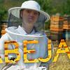 Las abejas se están muriendo