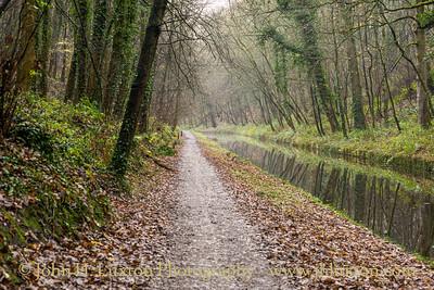 Llangollen Canal - Canal Wood Cutting - December 11, 2020