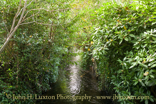 The Tavistock Canal, Devon - October 25, 2017