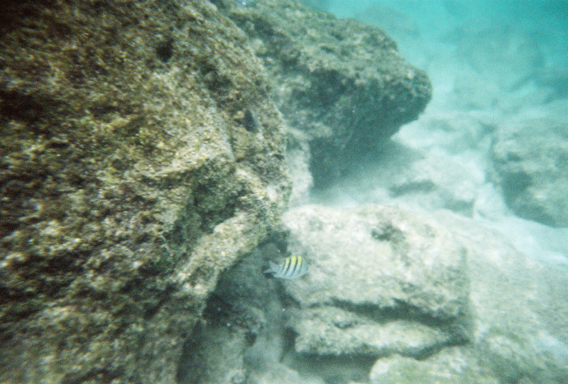 Snorkeling at Xcaret, with a disposable underwater camera