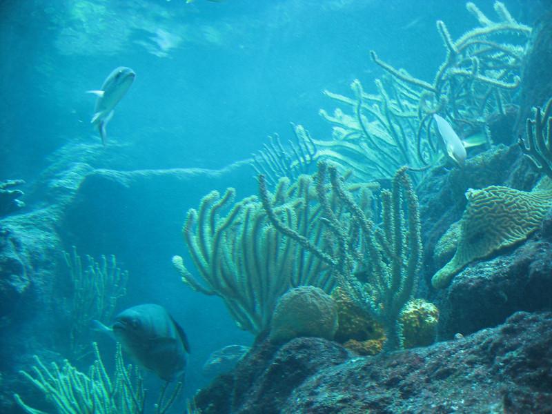 Fish at Xcaret