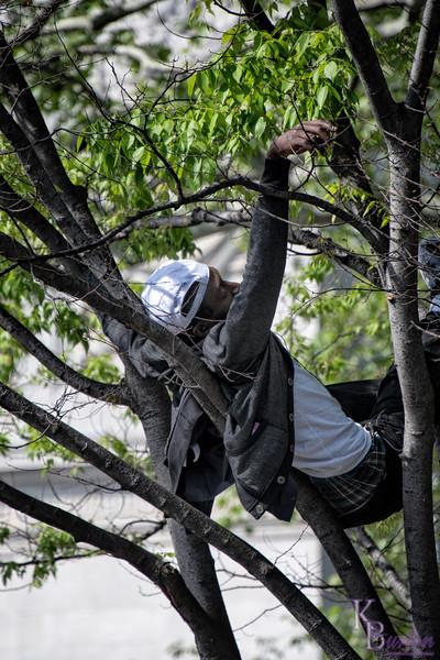 DSC_8956 up a tree