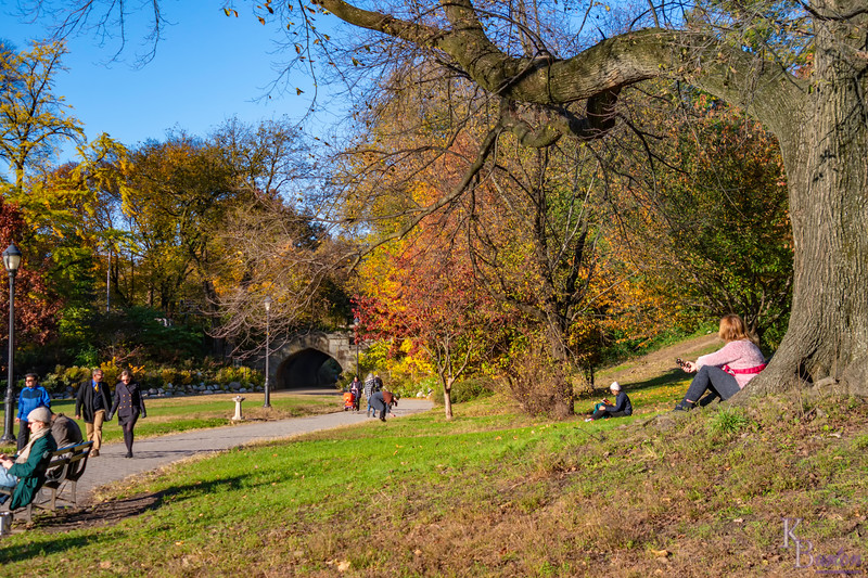 DSC_3602 fall in Prospect Park