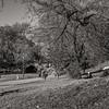 DSC_3601 fall in Prospect Park