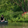 Last year I was walking down the road a few yards in front of where that couple in this picture was walking here, only in the opposite direction. As I did, I noticed numerous red flowering plants growing along the bank, and I stopped and took several nice shots of them with rowboats passing behind them which made for a pleasant background.<br /> <br />  So this year I went back for more. Interestingly, the time of day had the sun back lighting the flowers, which made them even more photogenic than before. But a low lying fence to protect the grass prevented me from getting the shot of them I really wanted. So I walked around the lake to this vantage point, to see if I could find another way to work these flowers into a shot.