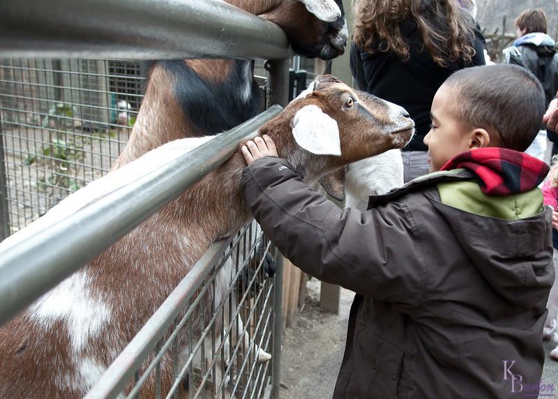DSC_0506 getting Noel's goat