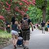 DSC_0190 walk in the park