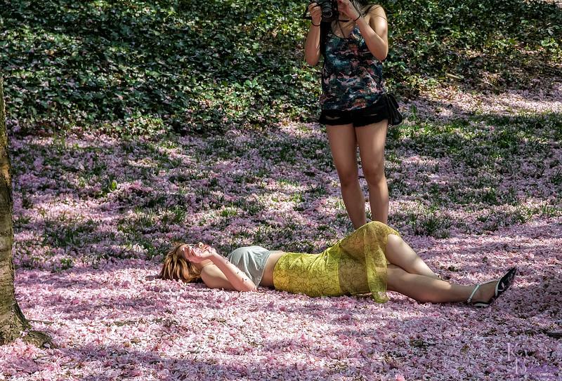 DSC_4580 flower bed