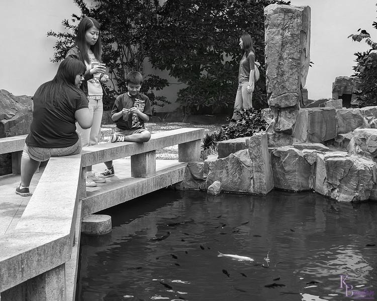 DSC_0440 feedin' the fishy's