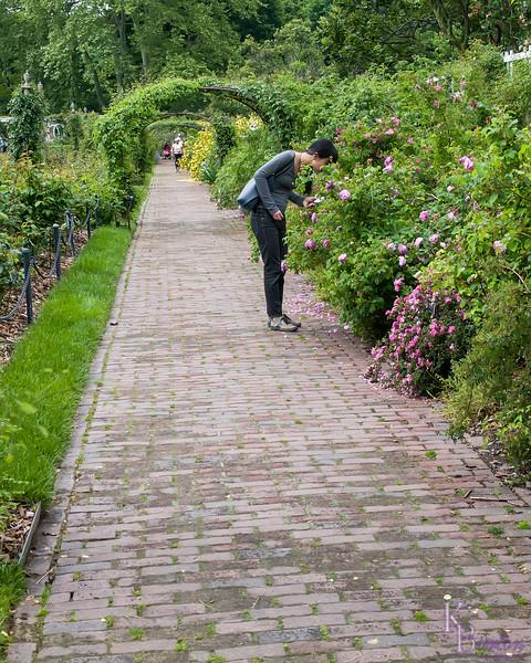 DSC_5727 scenes from the Rose Garden