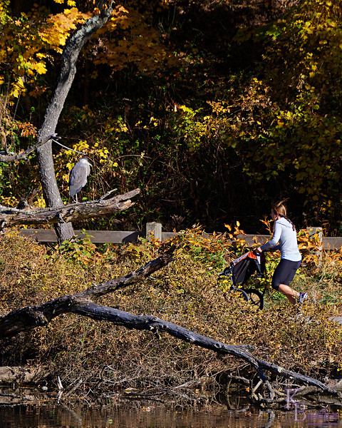 DSC_8457 fall time at Clove lakes_DxO