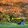 DSC_9352 fall scenes from Wave Hill