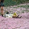 DSC_4598 flower bed