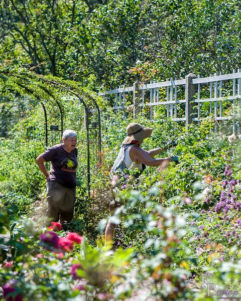 DSC_5895 scenes from the rose garden
