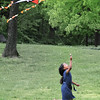 The few hours I spent watching parents and children flying kites together here in Central Park, made me smile and helped clear my mind as I tried to decide whether to turn mom over to hospice or stop them and give mom over to a natural healer that my brother and mom's good friend from her church were asking me to do. Watching them play reminded me of the life time of fun and laughter mom and I shared, and how much those times meant to the both of us. I felt a part of the great cycle of life as I watched children playing with their mom's, and how the time would one day come when they like me would have to make heavy decisions for their parents who could no longer make them for themselves, and how the memories of times like these, shared with their parents, would help to, unseen, guide their actions as they decide what will be best for their mom or dad.