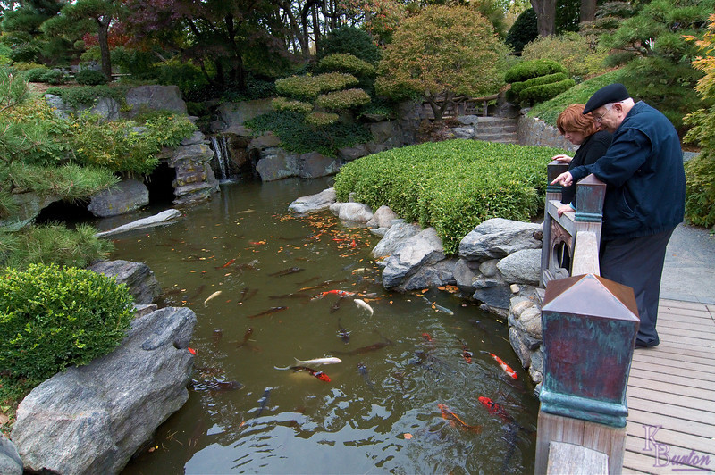 No matter which pond, nor what time of year, nor whether the visitor be young or old, the Koi of Brooklyn's Botanical Garden's are always a source of visual delight.