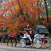 DSC_3267 Handsome ride in the fall