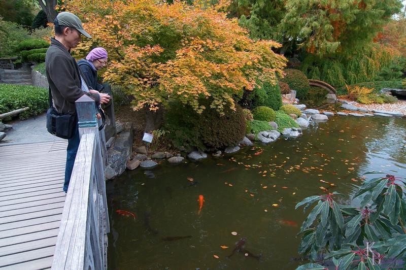 DSC_4944 fall scene at the Japanese Gardens