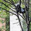 DSC_8955 up a tree