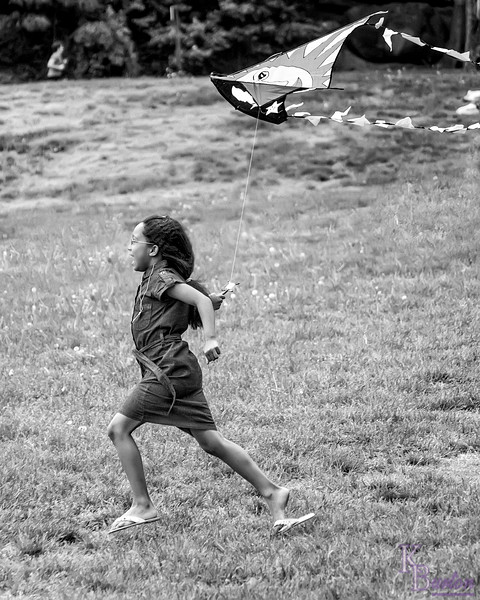 dsc_4740 let's go fly a kite