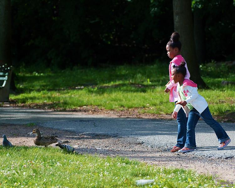 DSC_0759 bird feeding in the park