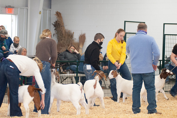 caney_valley_doe_show_20201212-16