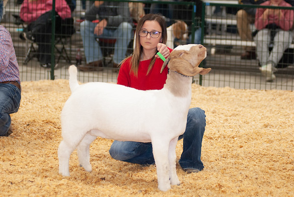caney_valley_doe_show_20201212-36