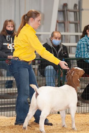 caney_valley_doe_show_20201212-43