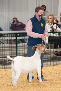 caney_valley_doe_show_20201212-24