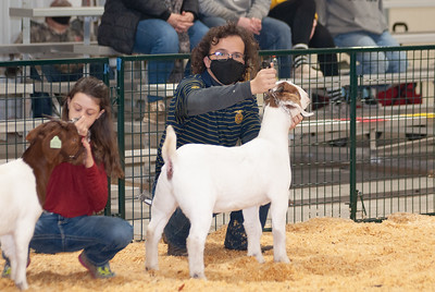 caney_valley_doe_show_20201212-8