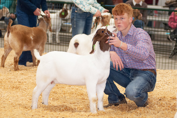 caney_valley_doe_show_20201212-37