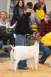 caney_valley_doe_show_20201212-20