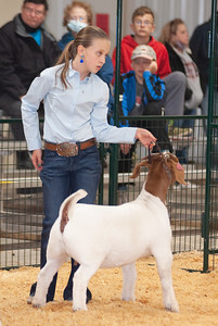 caney_valley_doe_show_20201212-48
