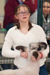 caney_valley_sheep_show_20201212-20