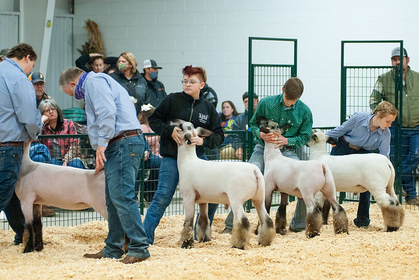 caney_valley_sheep_show_20201212-22