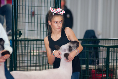caney_valley_sheep_show_20201212-15