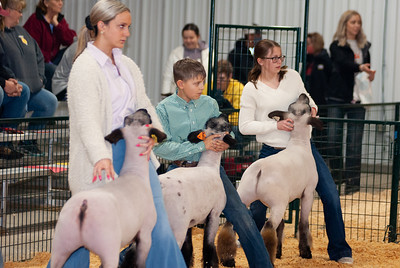 caney_valley_sheep_show_20201212-17