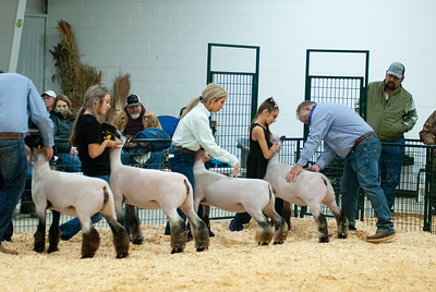 caney_valley_sheep_show_20201212-12