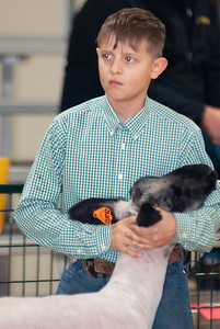 caney_valley_sheep_show_20201212-19