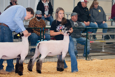 caney_valley_sheep_show_20201212-13