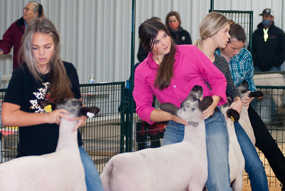 caney_valley_sheep_show_20201212-9