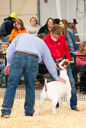 caney_valley_wether_show_20201212-8