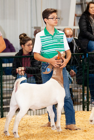caney_valley_wether_show_20201212-37