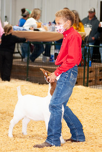 caney_valley_wether_show_20201212-23