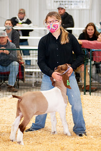 caney_valley_wether_show_20201212-14