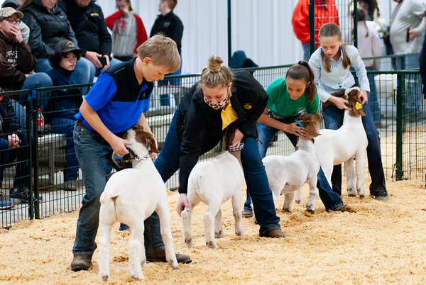 caney_valley_wether_show_20201212-1